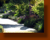 Davis CA Office Building Landscaping