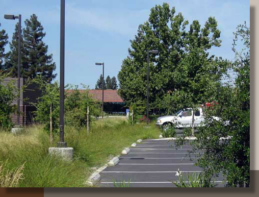 Parking Lot Water Treatment with Landscaping in Davis